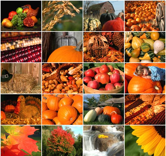 Thanksgiving-bb